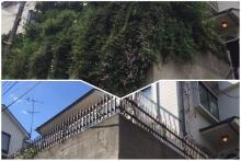 伐採の前と後の写真