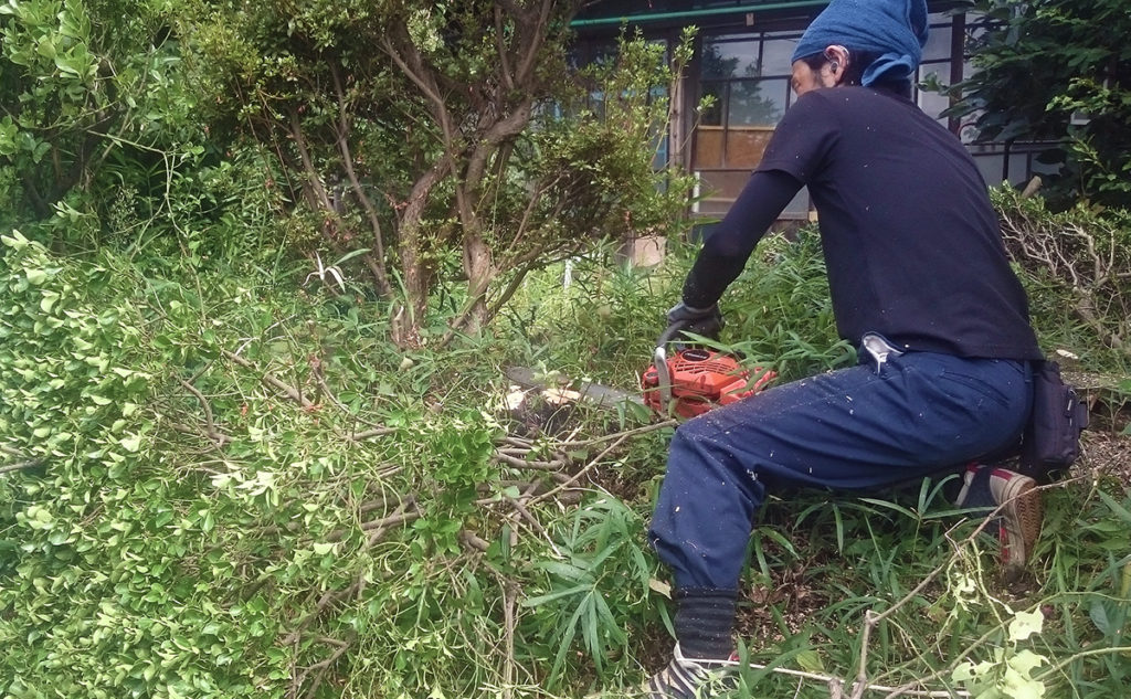 【港北区】植木の伐採