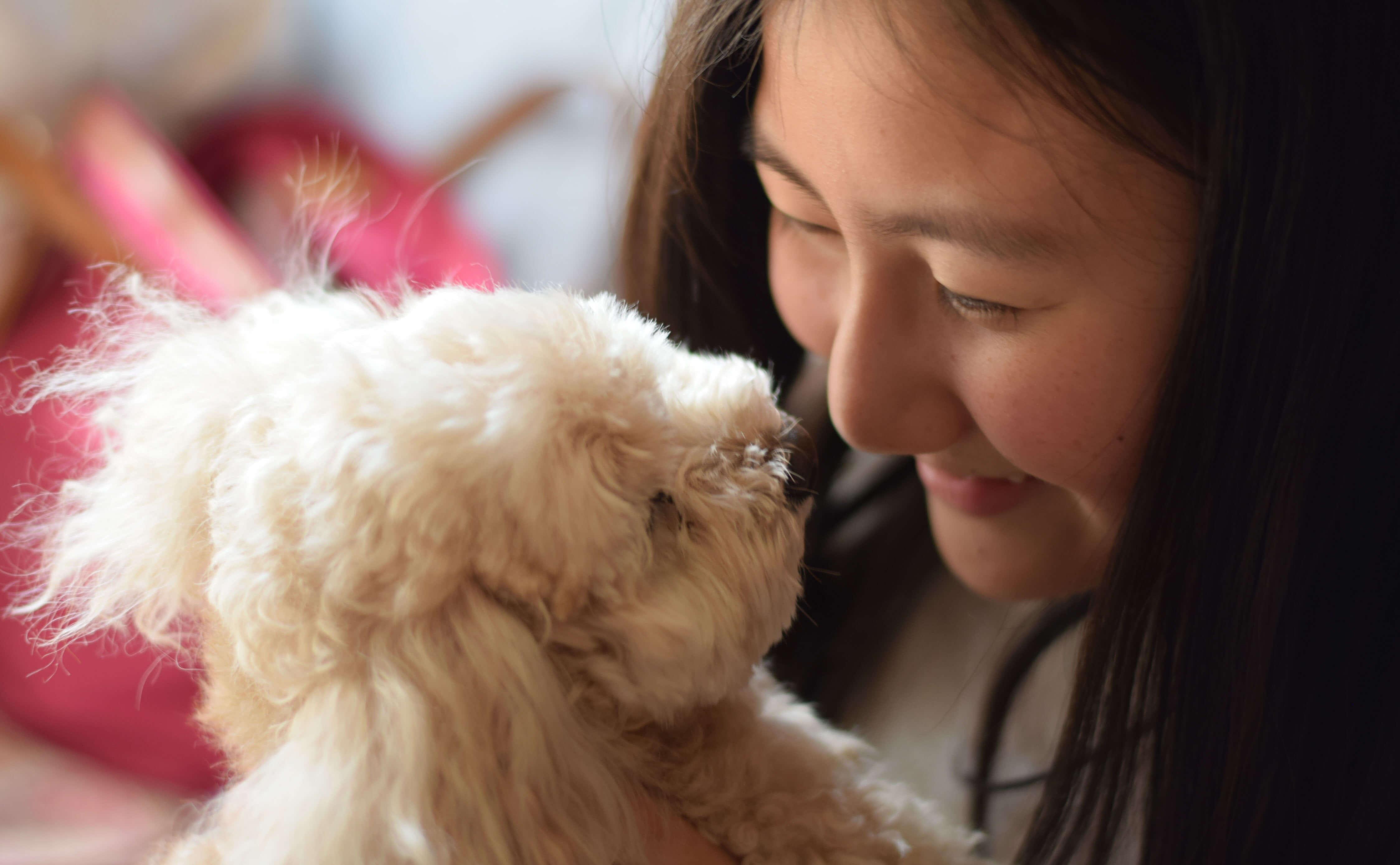 犬と向き合う女性の画像