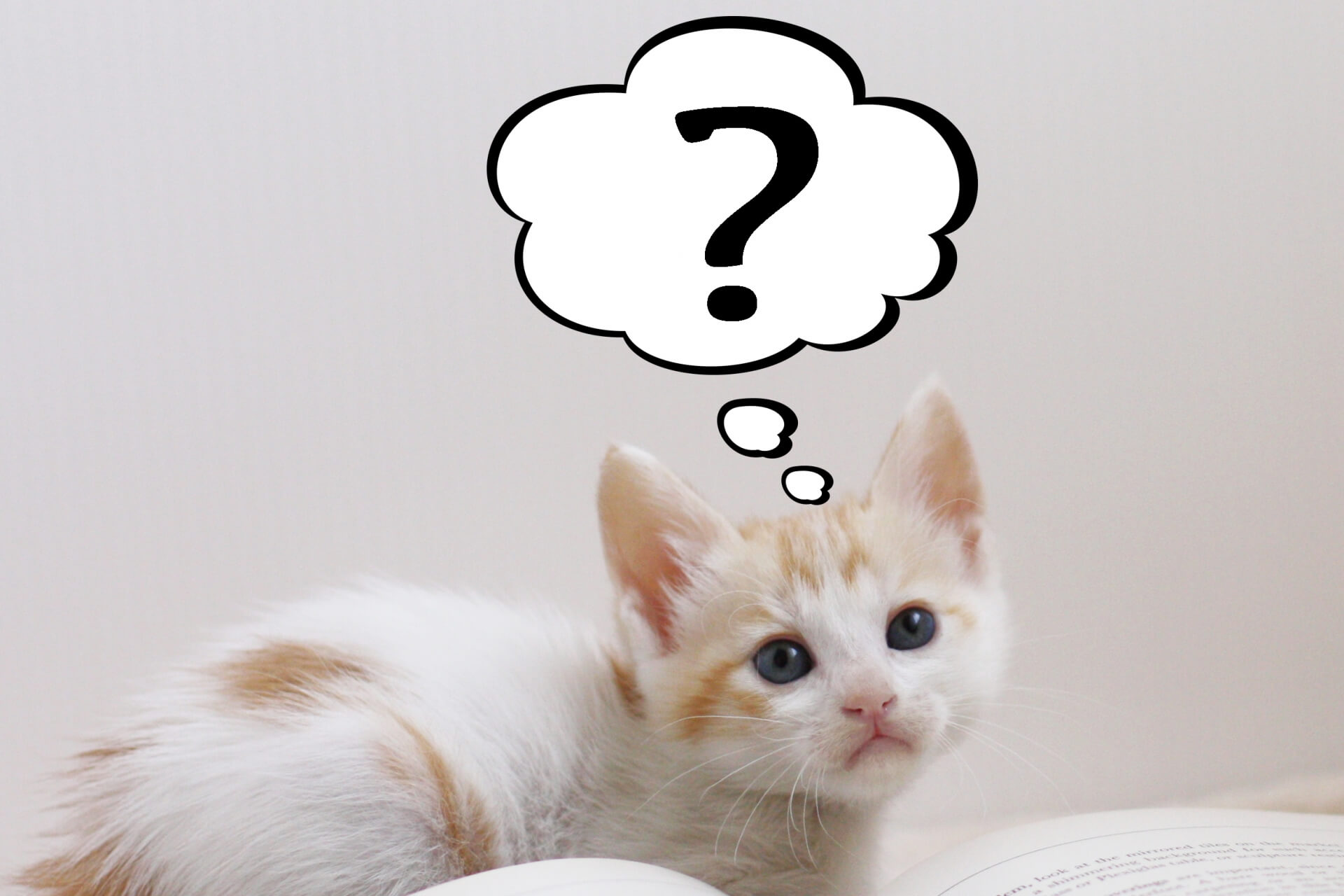 ?マークを浮かべる猫の画像