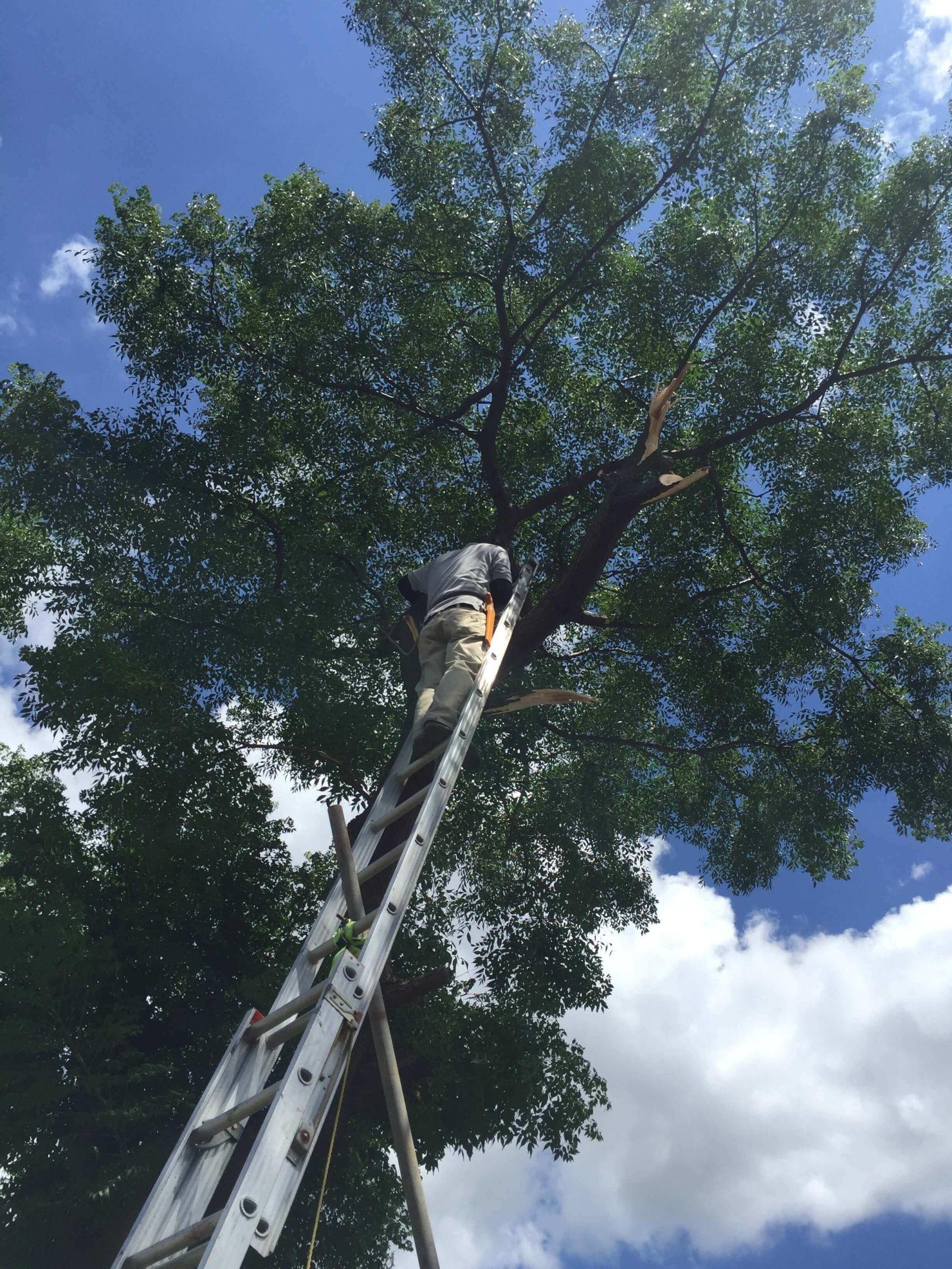 樹木伐採の様子:まとめて片付け。川崎市宮前区