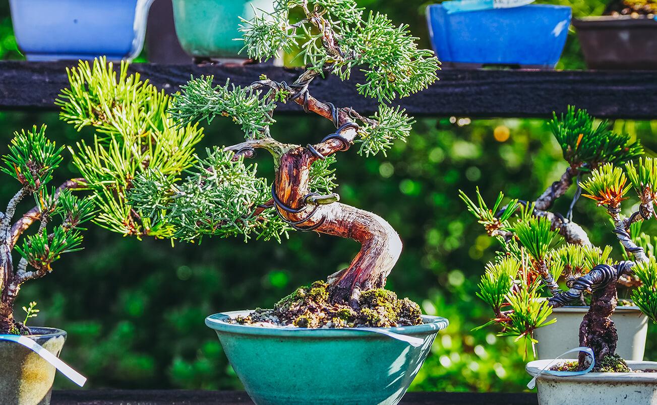 遺品整理では盆栽や花、観葉植物・多肉植物はどうお片付けすべきか の画像