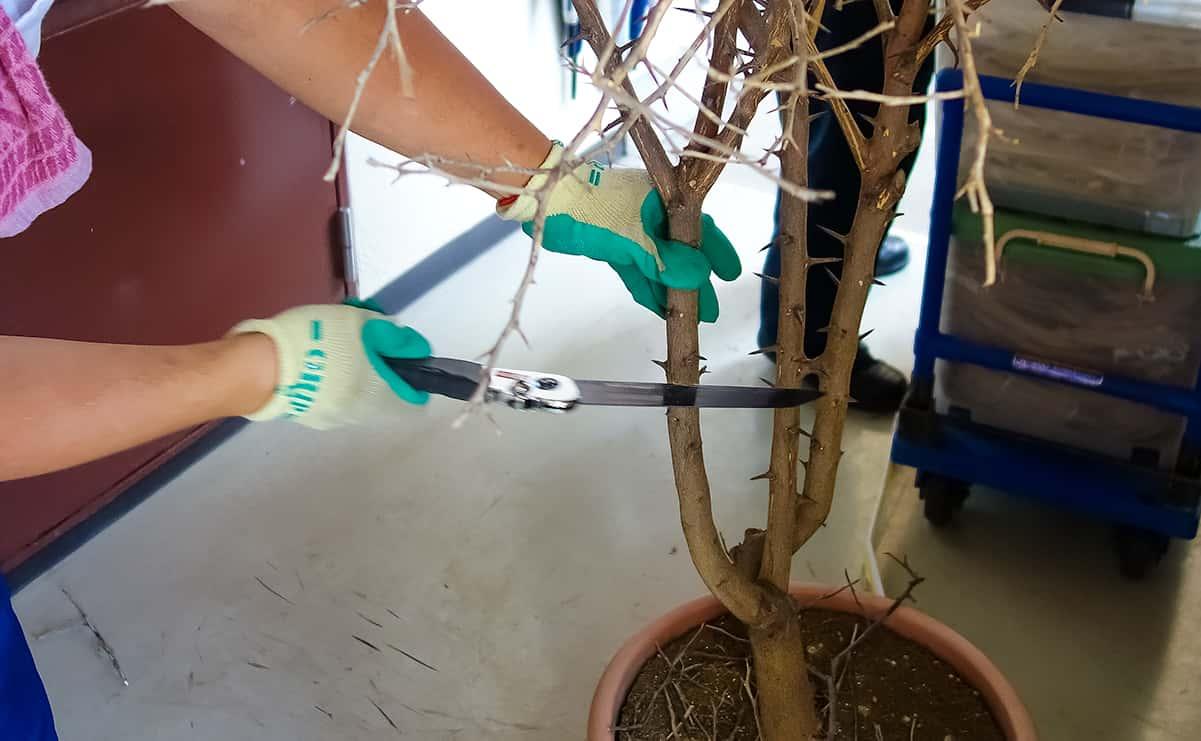 遺品整理での鉢植えを鋸で切っているの様子
