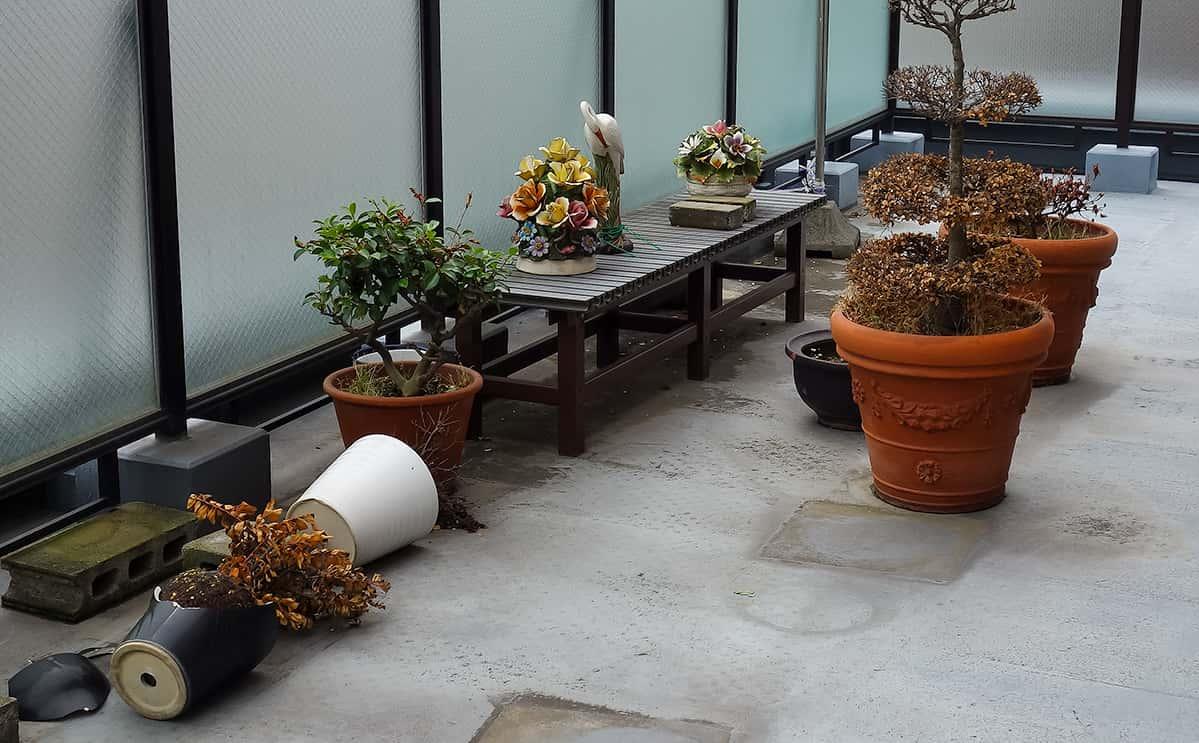屋上にある大きな鉢植え